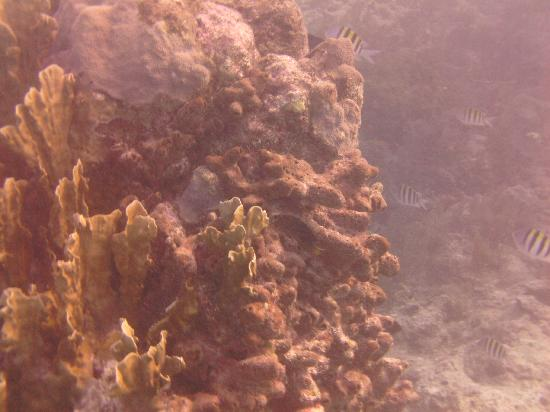 Molasses Reef: As it is today