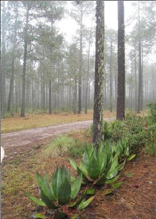 Pueblos Mancomunados: Bosque de la Sierra Norte
