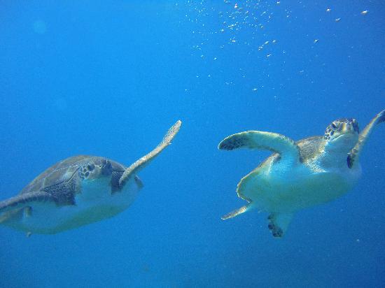 Itakadiving dive resort PADI : Nuestras amigas