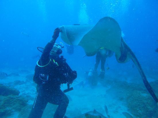 Itakadiving dive resort PADI: Chucho