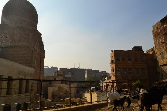 City of the Dead (Northern Cemetery): goats near the mosque