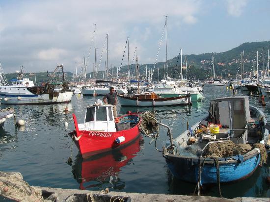 Ristorante Conchiglia : Hotel panoramico vista Golfo -:) pesce fresco ogni giorno
