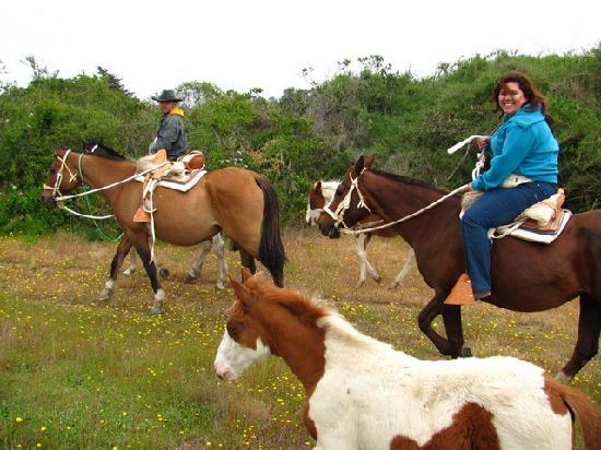 Paseos A Caballo, Cabalgatas En Algarrobo