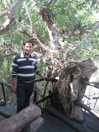 Pugdundee Safaris Tree House Hideaway: Tree house