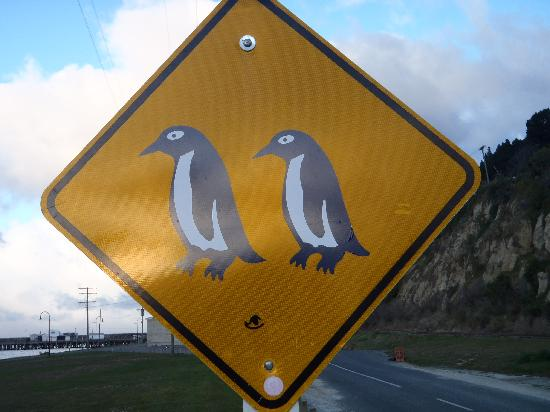 Oamaru Blue Penguin Colony: Warning sign