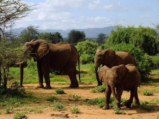 Tanke Tours: Elephants Samburu