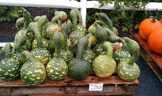Comfort Inn Lancaster - Rockvale Outlets: i loro prodotti agricoli