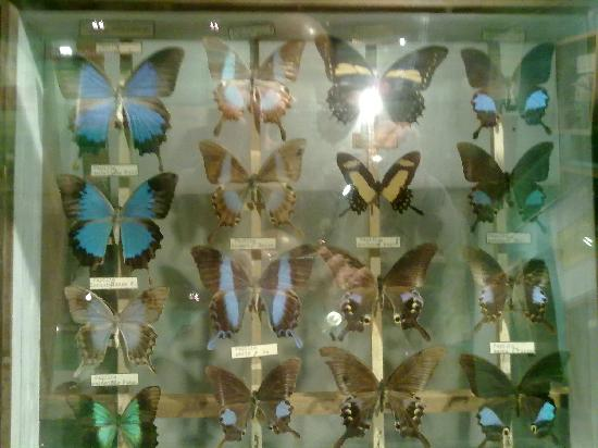 Museo Argentino de Ciencias Naturales Bernardino Rivadavia: Museo
