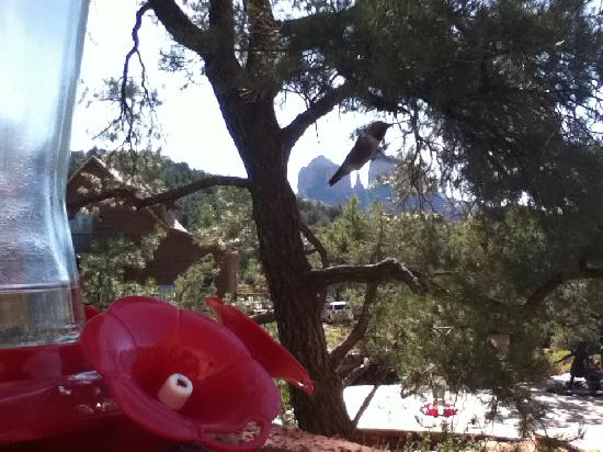 Sedona Cathedral Hideaway: hummingbirds and cathedral rock at breakfast