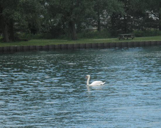 Smiley's B&B: Canoeing with the swans.