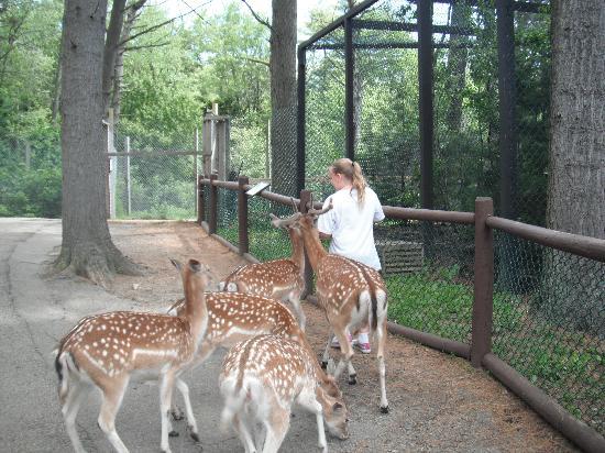York S Wild Kingdom Zoo And Fun Park Friendly Deer