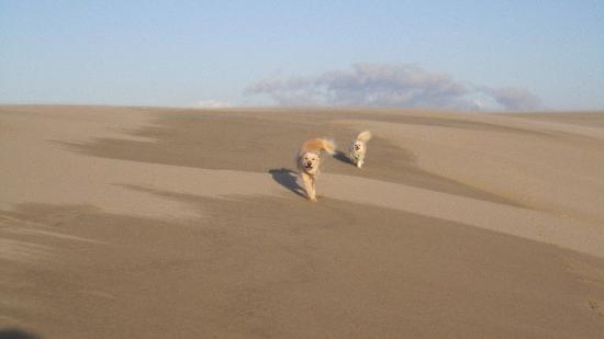 John Dellenback Dunes Trail: Dogs at play