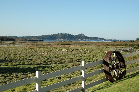 Mission Ranch: sheep meadow and Point Lobos