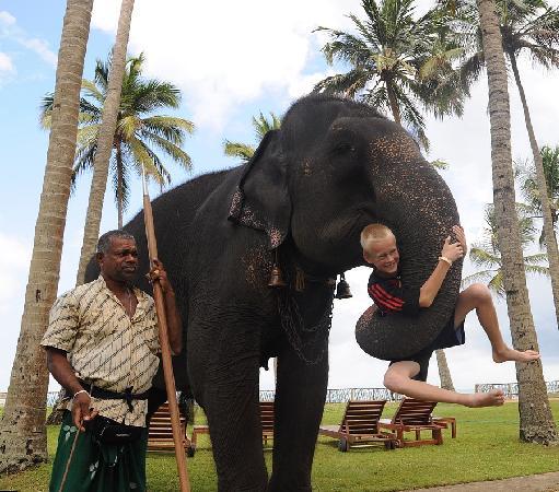 Wadduwa, Sri Lanka: Elefantenreiten im Hotelgarten