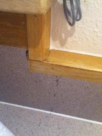 Wyndham Shearwater: Ants