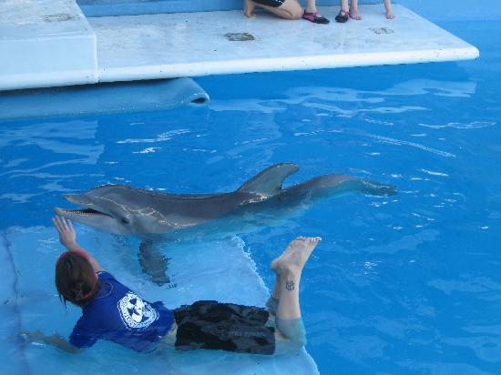 Clearwater Marine Aquarium: winter and volunteer