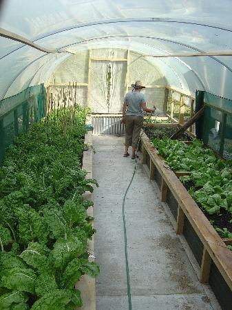 Awatuna Homestead: Organic Gardens
