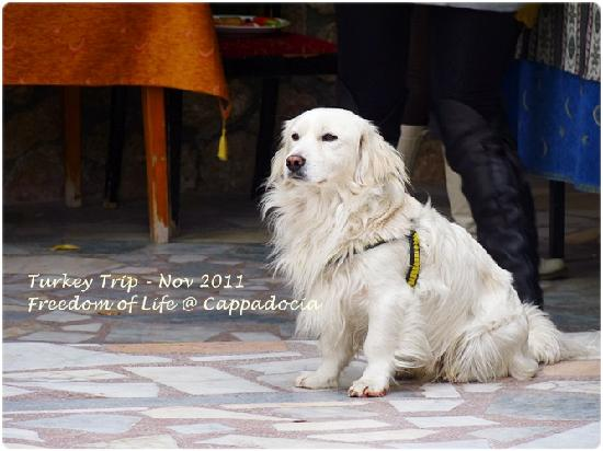 Anatolia Cave Pension: Another lovely dog!