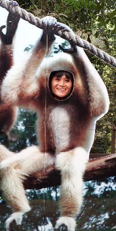Flight of the Gibbon: My Wife!! LOL Love you cheeky Monkey