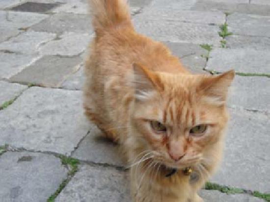 Palazzo Rollo : 猫ちゃんもいます