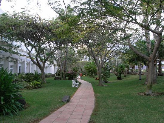 Tabaiba Princess : Part of the garden