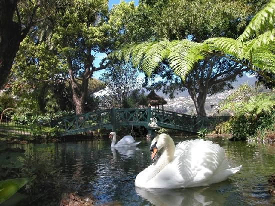 Quinta Jardins do Lago: Quinta Lake with swans
