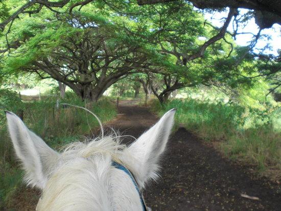 Kualoa Regional Park: On horseback