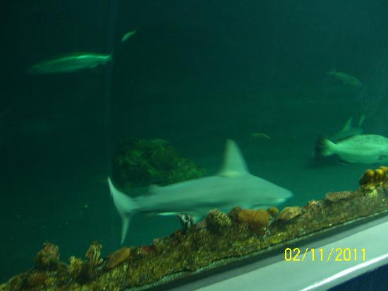 Aquarium of Veracruz: Tiburones