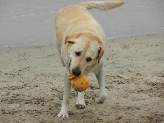 Huntington Dog Beach: cute