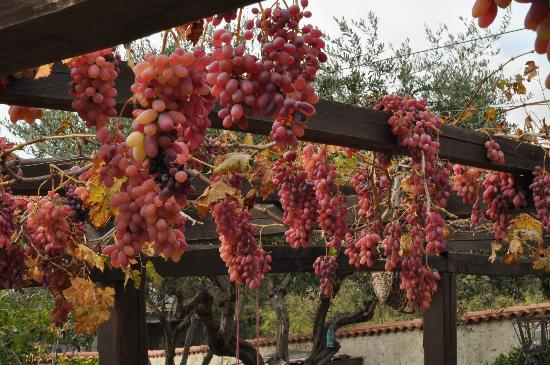 Casamica Bed & Breakfast: Delicious grapes