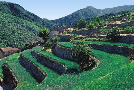 """""""En Cevennes"""" : traversiers plante doignons doux"""