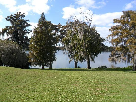 Harry P. Leu Gardens: lake view