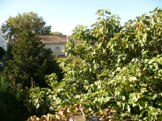 La Violette: garden