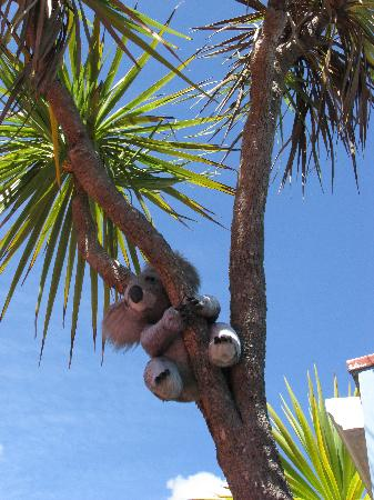 The Villa Backpackers Lodge: Geographically challanged koala