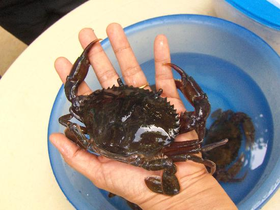 Tagum City River Cruise: the soft shell crab