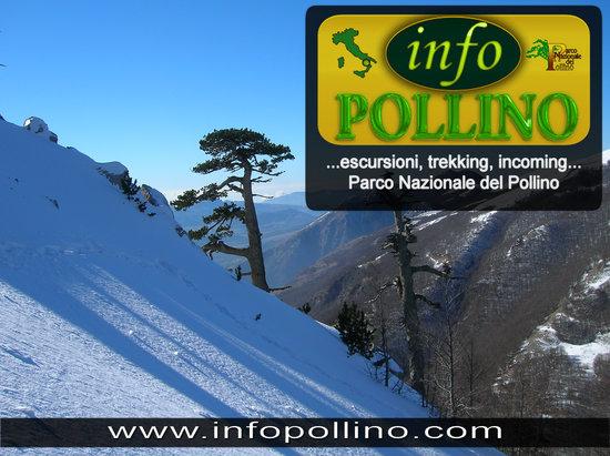 Viggianello, Italia: Infopollino: Trekking e Incoming