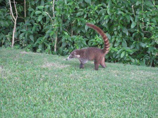 my breakfast view - Picture of Grand Bahia Principe Tulum ... |Grand Bahia Principe Tulum Animals