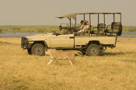 Linyanti Bush Camp : This is a Big 5 destination! Your guide will keep you safe...