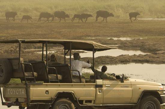 Saile Tented Camp: The Linyanti Swamps are one of the most attractive areas in the park as it is the only source of
