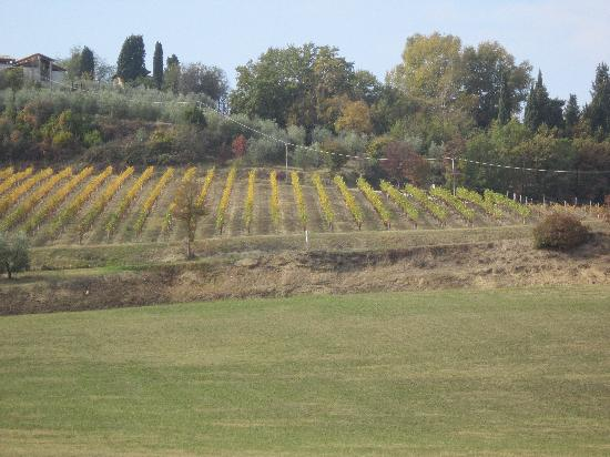Azienda Agricola ed Agrituristica Cafaggio: Olive groves