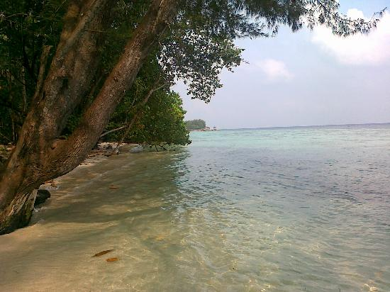 Alam Kotok Island Resort: the coast