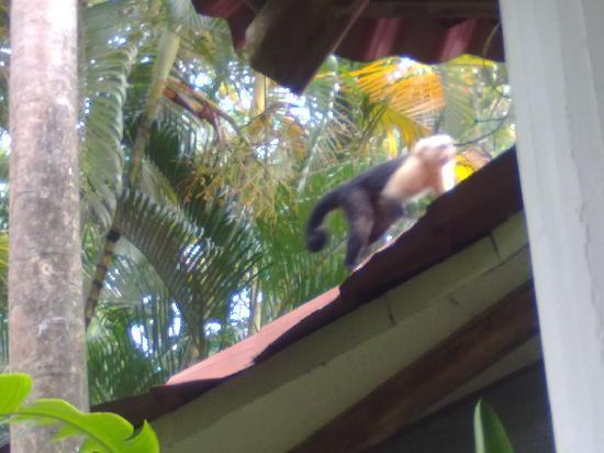 Hotel Luz de Mono : vida silvestre