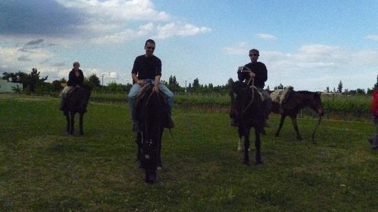 Quitralco Eco Aventura : con el caballo a la bodega