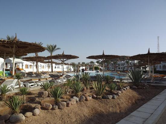 Sonesta Beach Resort & Casino: Cactus pool
