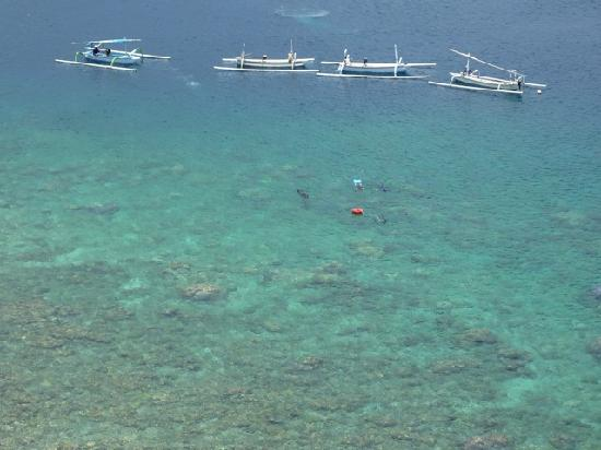 Bayu Cottages Hotel and Restaurant : coral reef