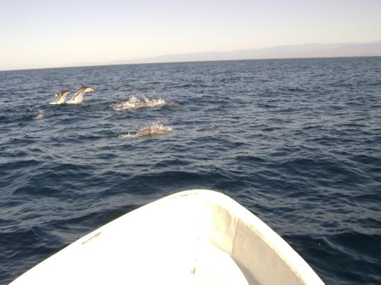 Omar's Sportfishing: Dolphin watching With Omar's sport fishing