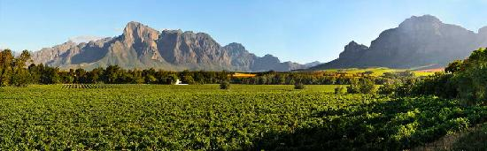 Vrede en Lust Estate: The view across the vineyards to the surrounding mountains
