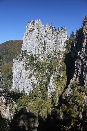 Kaltenbachwildnis: Blick auf den Adlerhorst