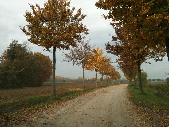 Casa Medievale del Mugnaio B&B: Trees line the road to the property