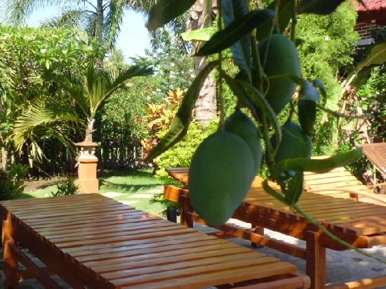 Mumbul Guesthouse: view of gardens